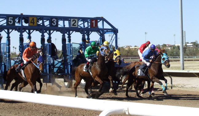 Starting gate at Rillito Park